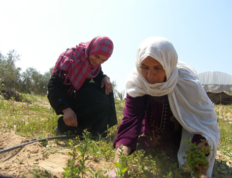 Nadia Eslayeh weeding her land with her mother-in-law